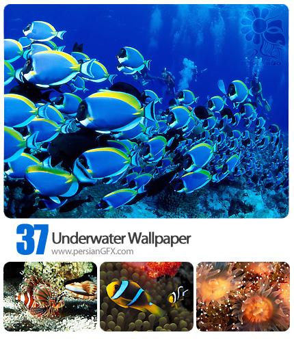 تصاویر پس زمینه دنیای زیر آب - Underwater Wallpaper