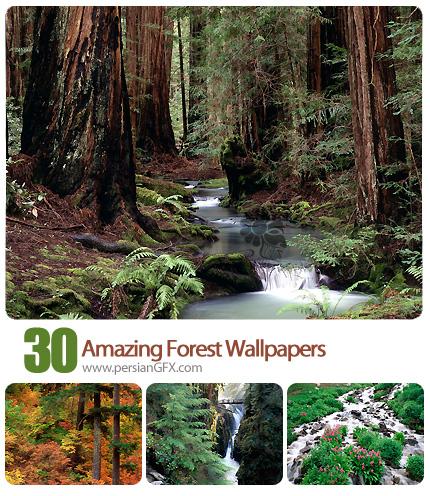 تصاویر والپیپر جنگل آمازون، منظره، طبیعت - Amazing Forest Wallpapers
