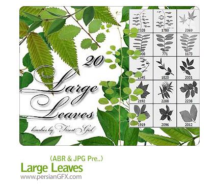 دانلود مجموعه ای از براش برگ درختان  - Large Leaves