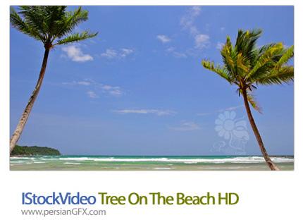 دانلود فایل آماده ویدئوی ساحل، درخت در ساحل  - IStockVideo Tree On The Beach HD