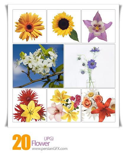 تصاویر گل - Flower