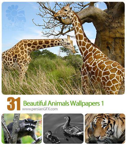 دانلود تصاویر والپیپر زیبا از حیوانات، حیات وحش -  Beautiful Animals Wallpapers 01