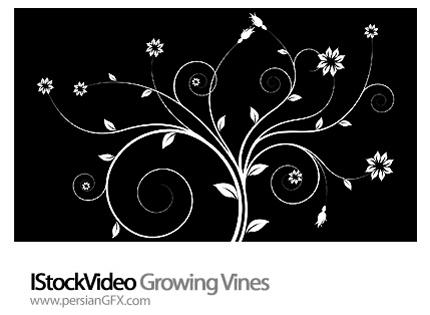 دانلود فایل آماده ویدئویی رشد گل - IStockVideo Growing Vines
