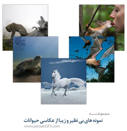 نمونه های بی نظیر و زیبا از عکاسی حیوانات