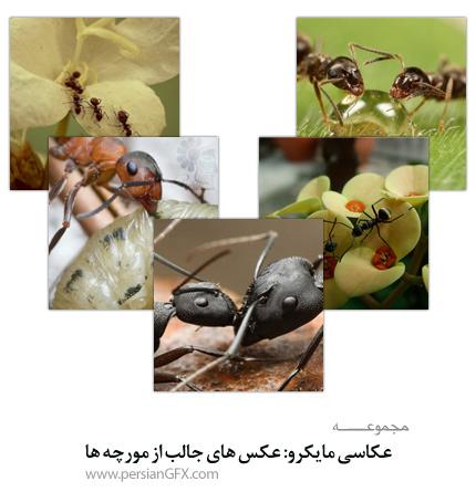 عکاسی ماکرو: عکس های جالب از مورچه ها
