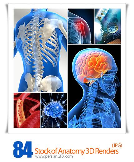 دانلود تصاویر سه بعدی آناتومی - Stock of Anatomy 3D Renders