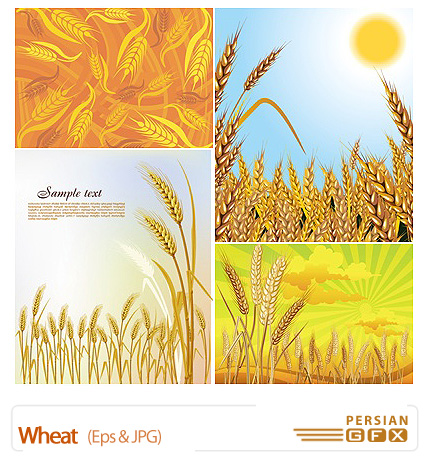 دانلود تصاویر وکتور گندم - Wheat