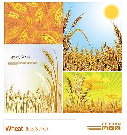 PersianGFX - تصاویر گندمدانلود تصاویر وکتور گندم - Wheat