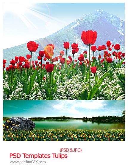 دانلود تصاویر لایه باز پس زمینه مناظر گل های لاله - PSD Templates Tulips