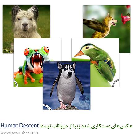 عکس های دستکاری شده زیبا از حیوانات توسط Human Descent