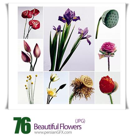 مجموعه تصاویر گل های زیبا - Beautiful Flowers