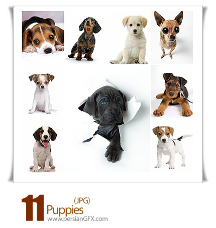 مجموعه تصاویر توله سگ - Puppies