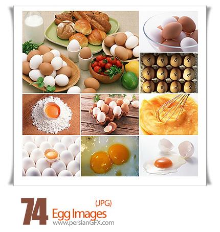مجموعه تصاویر تخم مرغ - Egg Images