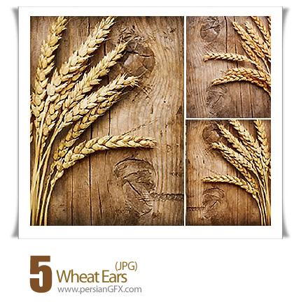 PersianGFX - تصاویر خوشه های گندمدانلود تصاویر باکیفیت خوشه های گندم - Wheat Ears