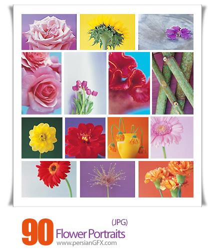 دانلود تصاویر با کیفیت پرتره گل - Veer Fancy Flower Portraits