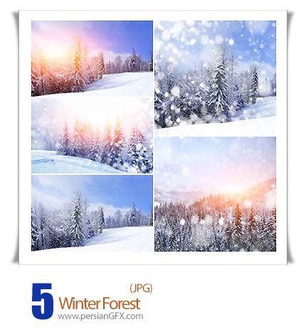 دانلود تصاویر با کیفیت جنگل زمستانی - Winter Forest