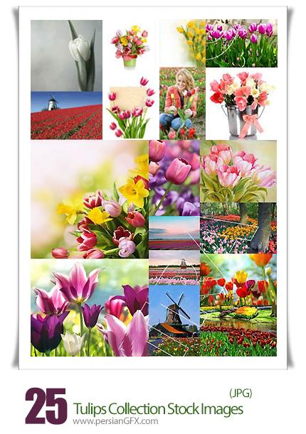 دانلود تصاویر با کیفیت کلکسیون گل لاله - Tulips Collection 25 HQ Stock Images