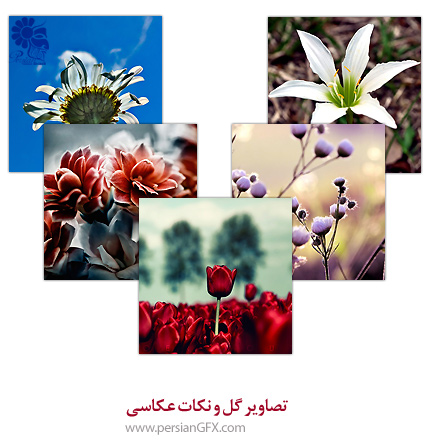 طبیعت به زیبا ترین شکل ممکن - تصاویر گل و نکات عکاسی