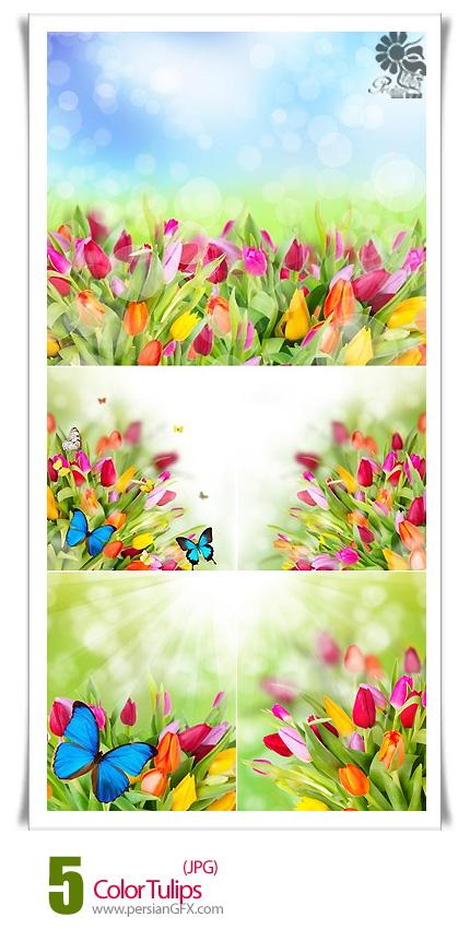 دانلود تصاویر با کیفیت گل های لاله رنگارنگ - Color Tulips