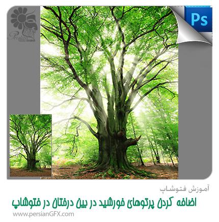 آموزش فتوشاپ - اضافه کردن پرتوهای خورشید در بین درختان در فتوشاپ