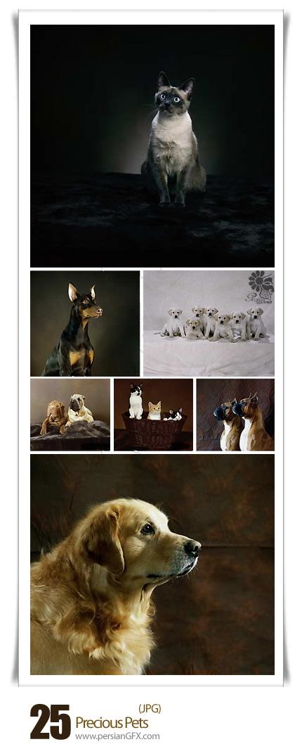 دانلود تصاویر با کیفیت حیوانات خانگی گرانبها - Precious Pets