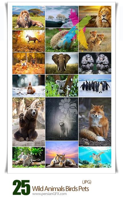 دانلود تصاویر با کیفیت حیوانات وحشی، حیوانات خانگی، پرندگان - Wild Animals Birds Pets