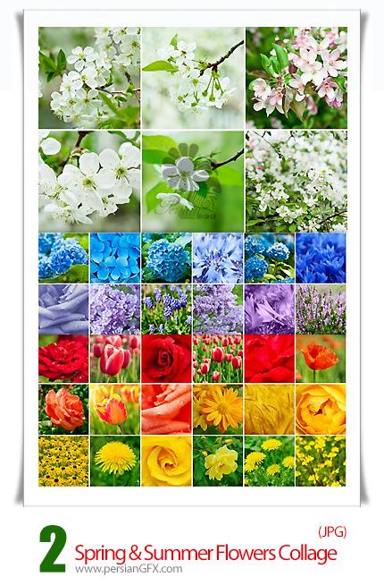دانلود تصاویر با کیفیت گل های رنگارنگ بهاری - Spring & Summer Flowers Collage