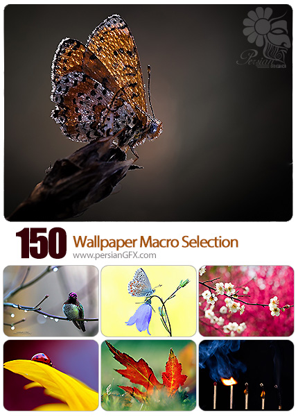 دانلود والپیپر تصاویر متنوع ماکرو - Wallpaper Macro Selection