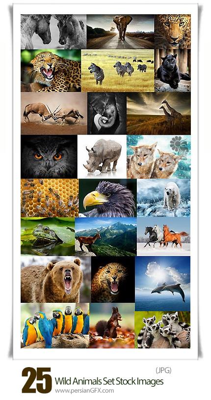 دانلود مجموعه تصاویر با کیفیت حیوانات وحشی، ببر، خرس، زرافه - Wild Animals Set Stock images