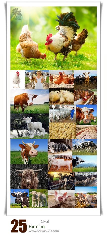 دانلود تصاویر با کیفیت کشاورزی، دامداری، حیوانات اهلی - Farming
