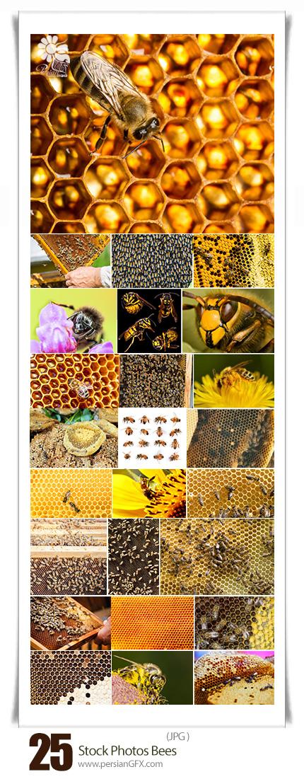 دانلود تصاویر با کیفیت زنبور، کندوی عسل، لانه زنبور - Stock Photos Bees