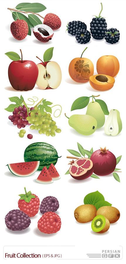 دانلود تصاویر وکتور میوه، هندوانه، تمشک، سیب، هلو و ... - Fruit Collection