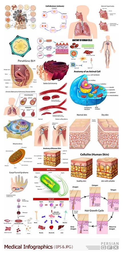 دانلود تصاویر وکتور نمودارهای اینفوگرافیکی پزشکی، سلول، رگ، باکتری، بافت پوست، گلبول قرمز - Medical Infographics