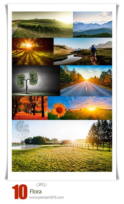 دانلود تصاویر با کیفیت مناظر و طبیعت - Flora