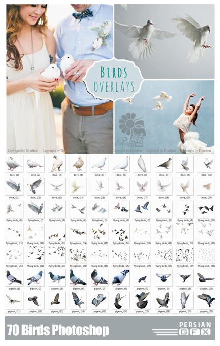 دانلود تصاویر کلیپ آرت عناصر طراحی، کبوتر - CM 70 Birds Photoshop Overlays