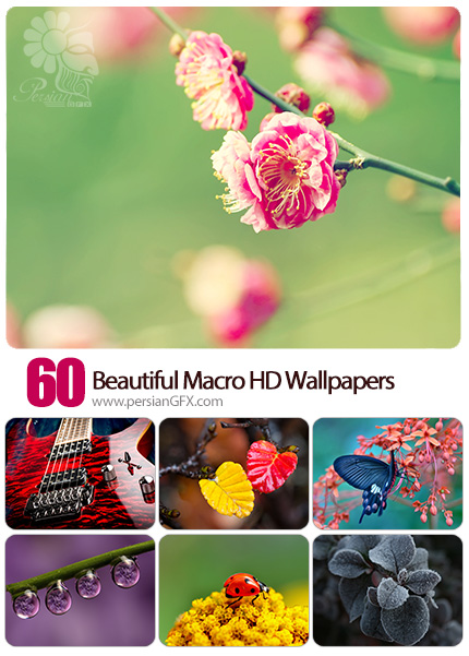 دانلود والپیپرهای متنوع طبیعت - 60 Beautiful Macro HD Wallpapers