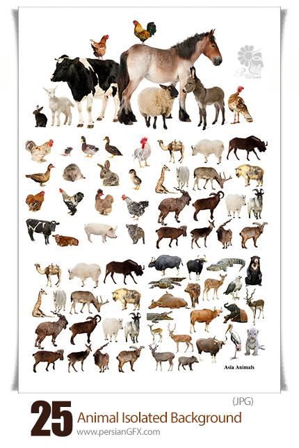 دانلود تصاویر با کیفیت حیوانات اهلی و وحشی، سگ، گربه، گاو ...