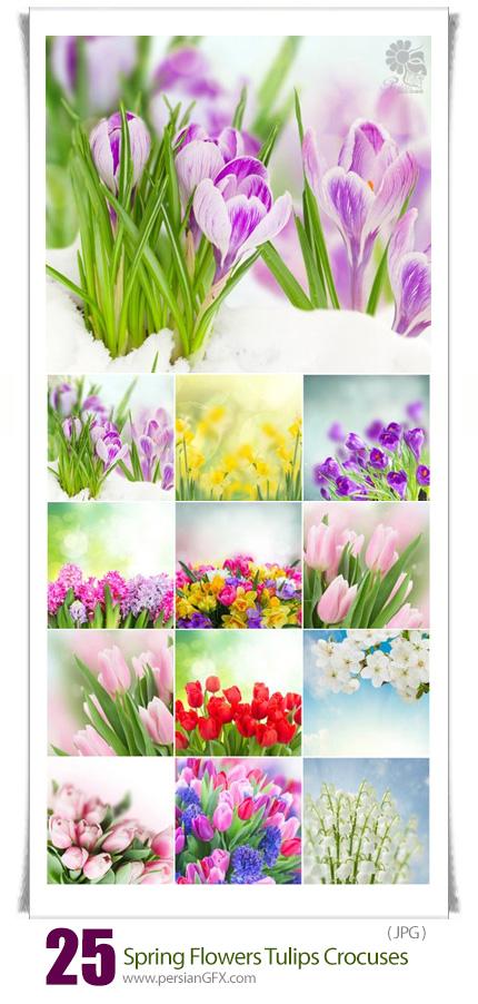 دانلود تصاویر با کیفیت گل های بهاری، گل لاله، گل سنبل و ... - Spring Flowers Tulips Crocuses Hyacinths