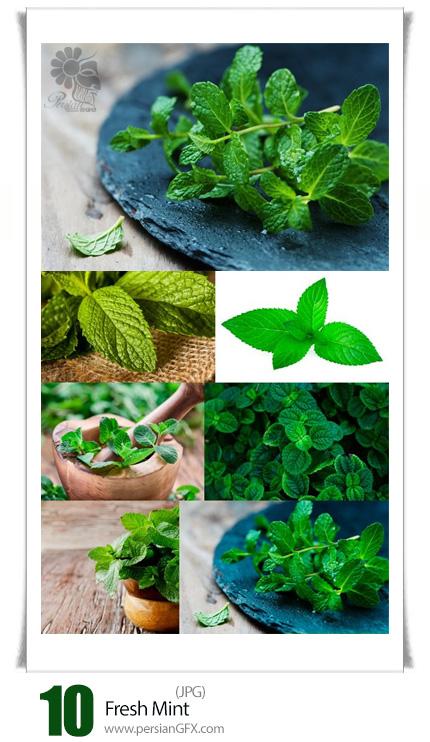 دانلود تصاویر با کیفیت نعناع تازه - Fresh Mint