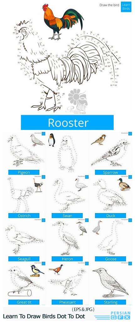 دانلود تصاویر وکتور قالب های آموزشی طراحی و رسم پرندگان با نقاط - Learn To Draw Birds Dot To Dot