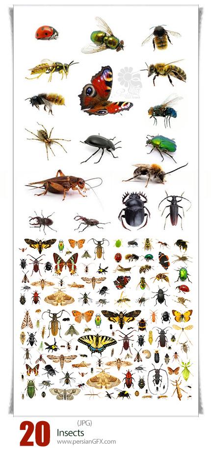 دانلود تصاویر با کیفیت حشرات، سوسک، زنبور، پروانه، مورچه، ملخ و ... - Insects