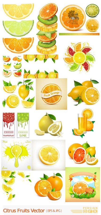 دانلود تصاویر وکتور مرکبات پرتقال، لیمو شیرین، گریفروت، نارنگی و ... - Citrus Fruits Vector
