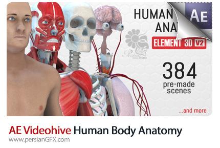 دانلود پروژه آماده افترافکت نمایش آناتومی بدن انسان به همراه فایل آموزشی از ویدئوهایو - Videohive Human Body Anatomy AE Template