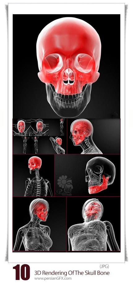 دانلود تصاویر با کیفیت سه بعدی آناتومی جمجمه، استخوان و اسکلت بدن - 3D Rendering Illustration Of The Skull Bone