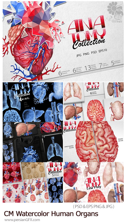 دانلود مجموعه تصاویر لایه باز و با کیفیت عناصر طراحی آبرنگی اعضای بدن انسان، قلب، کبد، کلیه و ... - CM Watercolor Human Organs