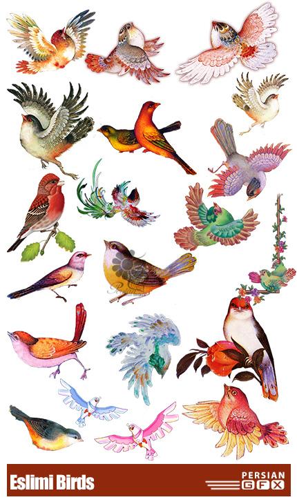 دانلود 35 تصویر لایه باز پرنده های اسلیمی متنوع - Eslimi Birds
