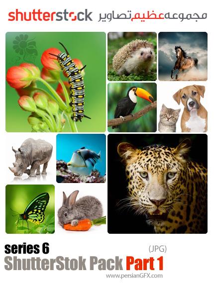 دانلود مجموعه عظیم تصاویر شاتر استوک 2016 - بخش 1: حیوانات
