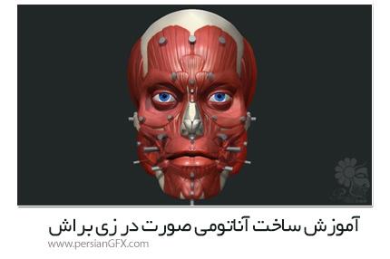 دانلود آموزش ساخت آناتومی صورت در زی براش از Uartsy - Uartsy Anatomy Of The Face