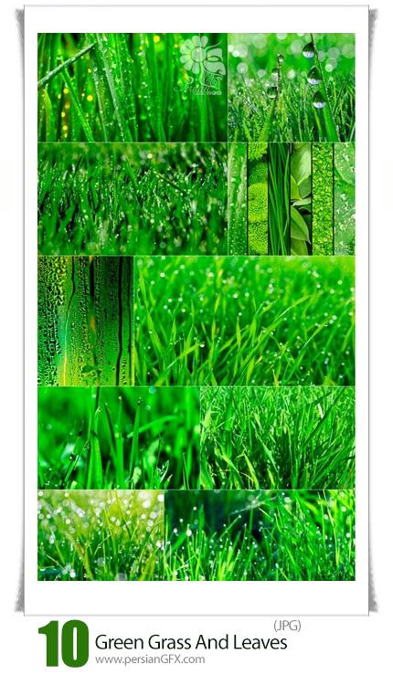 دانلود تصاویر با کیفیت برگ و چمن سبز - Green Grass And Leaves