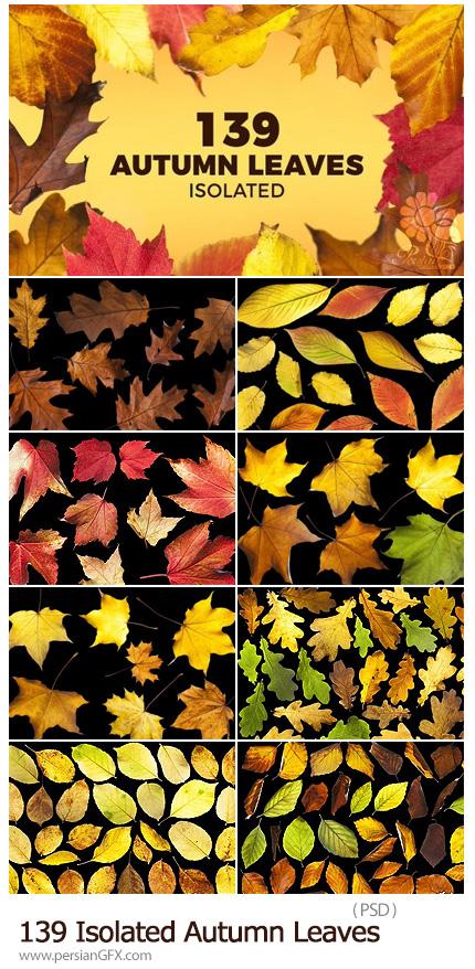 دانلود قالب لایه باز 139 برگ پاییزی بدون بک گراند متنوع - 139 Isolated Autumn Leaves